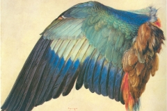 Wing of a European Roller is a nature study watercolor by Albrecht Dürer, 1512